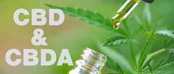CBD Olie (CBD en CBDA)