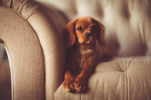 CBD voor honden CBD-Expert