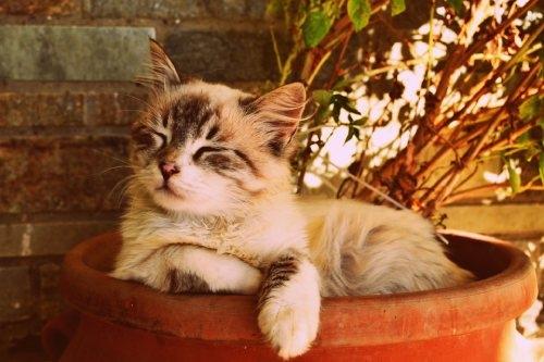 Slapende kitten CBD-Expert