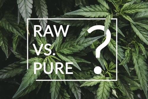 hennepplanten - kiest u raw of pure cbd olie?
